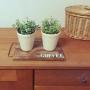 My Shelf/観葉植物/ナチュラル/雑貨/100均/ハンドメイド/北欧/セリア/フェイクグリーン/広松木工/キャトルセゾン/柳のかご/植物のある暮らし/コーヒートレイに関連する部屋のインテリア実例