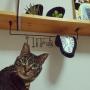 On Walls/ダイソー/セリア/フェイクグリーン/ねこのいる風景/フライングタイガーコペンハーゲン/にゃんこ/コーナン木材/ねこが好き/ねこと暮らす/ダリの時計に関連する部屋のインテリア実例