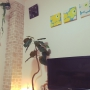 Lounge/観葉植物/ダイソー/100均/一人暮らし/北欧/ニトリ/セリア/フェイクグリーン/マリメッコ ファブリックパネルに関連する部屋のインテリア実例