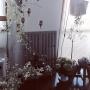 My Desk/モビール/グレー好き/みどりのある暮らし/気球冒険中に関連する部屋のインテリア実例