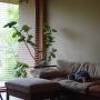 Bedroom/観葉植物/ソファ/窓際/ウッドブラインド/カポック/雨の日/広松木工/シーグレープ/窓際のグリーン/こどもと暮らす。に関連する部屋のインテリア実例