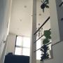 Lounge/観葉植物/IKEA/モビール/ウンベラータ/コウモリラン/FLOS/シンプルライフ/NO GREEN NO LIFE/いいね!ありがとうございます♪/緑のある暮らし/苔玉コウモリラン/MOD.2097/バンビーノに関連する部屋のインテリア実例