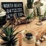 My Shelf/サボテン/多肉植物/ワイン木箱/流木/エアプランツ/ハオルチア/水耕栽培/マハラジャ/植物のある暮らしに関連する部屋のインテリア実例