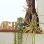 My Shelf/一人暮らし/セリア/salut!/フェイクグリーン/いなざうるす屋さん/niko and… に関連する部屋のインテリア実例