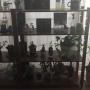 My Shelf/観葉植物/IKEA/DIY/ニトリ/セリア/エアプランツ/びん リメイクに関連する部屋のインテリア実例