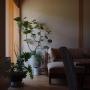 Lounge/観葉植物/ソファ/窓辺/植木鉢/大型観葉植物/広松木工/シーグレープ/植物のある暮らし/いつもいる場所に関連する部屋のインテリア実例