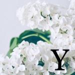 yoshi-pi