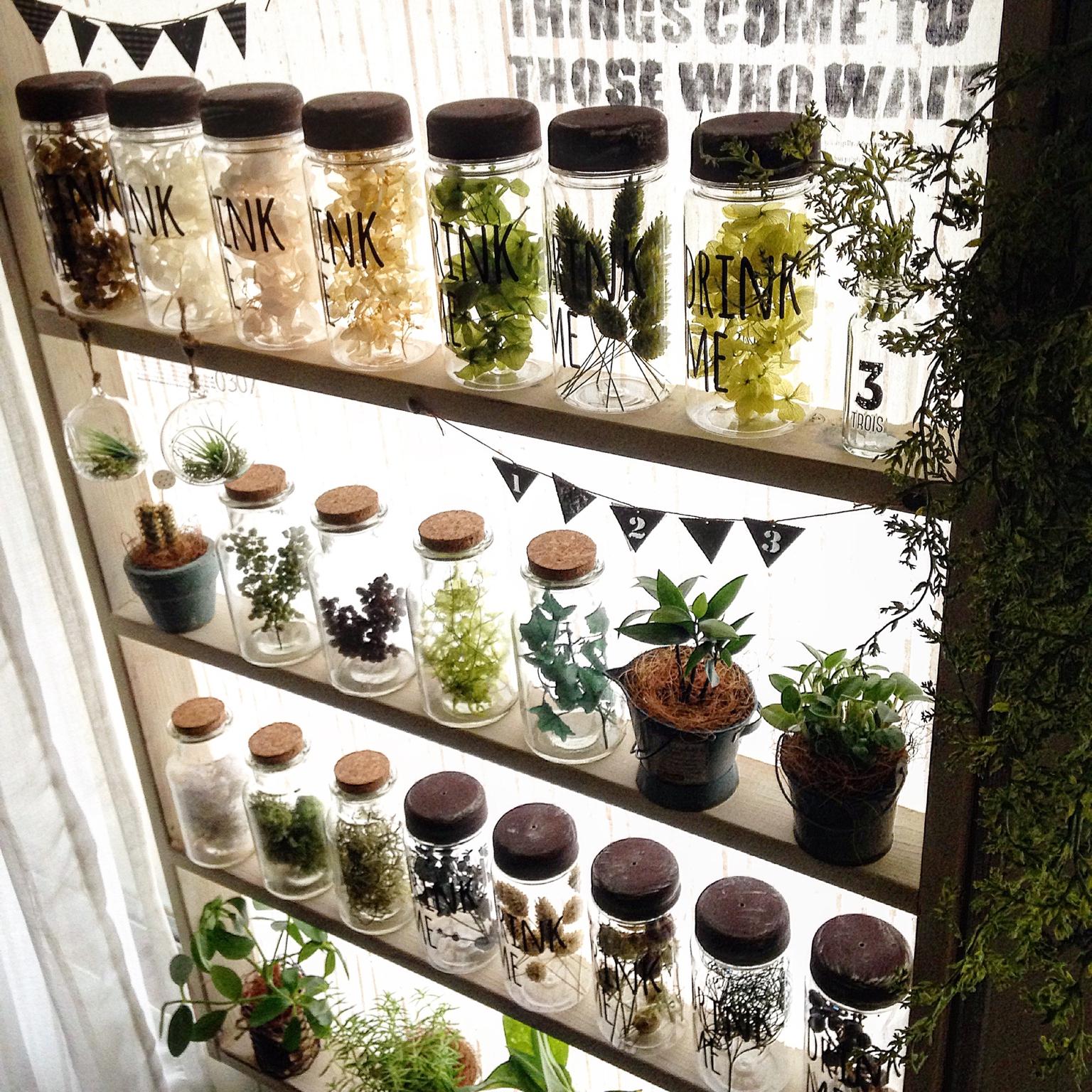 100均アイテムを使ってグリーンを飾っちゃおう♪ | RoomClip mag | 暮らしとインテリアのwebマガジン