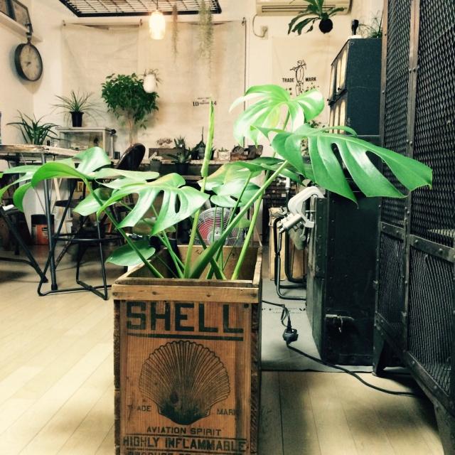 Mr.Romanさんの植物