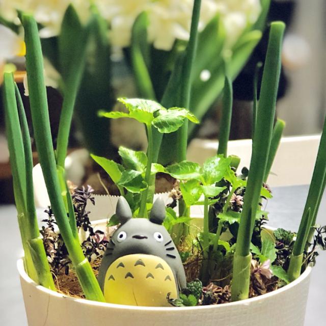 意外に簡単?! お手軽家庭菜園で食べられるグリーン作り
