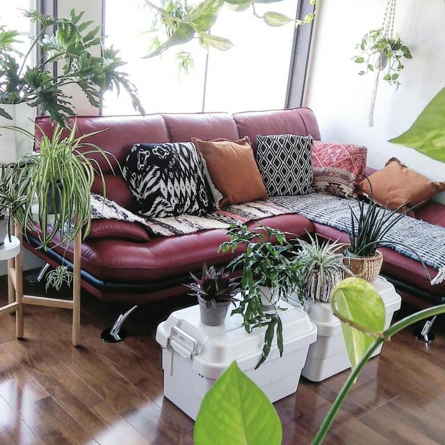 今、デザイン性が注目されているニトリ家具。簡単に真似できるコーディネート&色の合わせ方