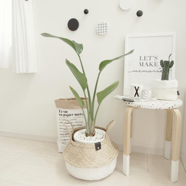 リメイク鉢で部屋が変わる!癒しのグリーンをリビングに | RoomClip mag | 暮らしとインテリアのwebマガジン