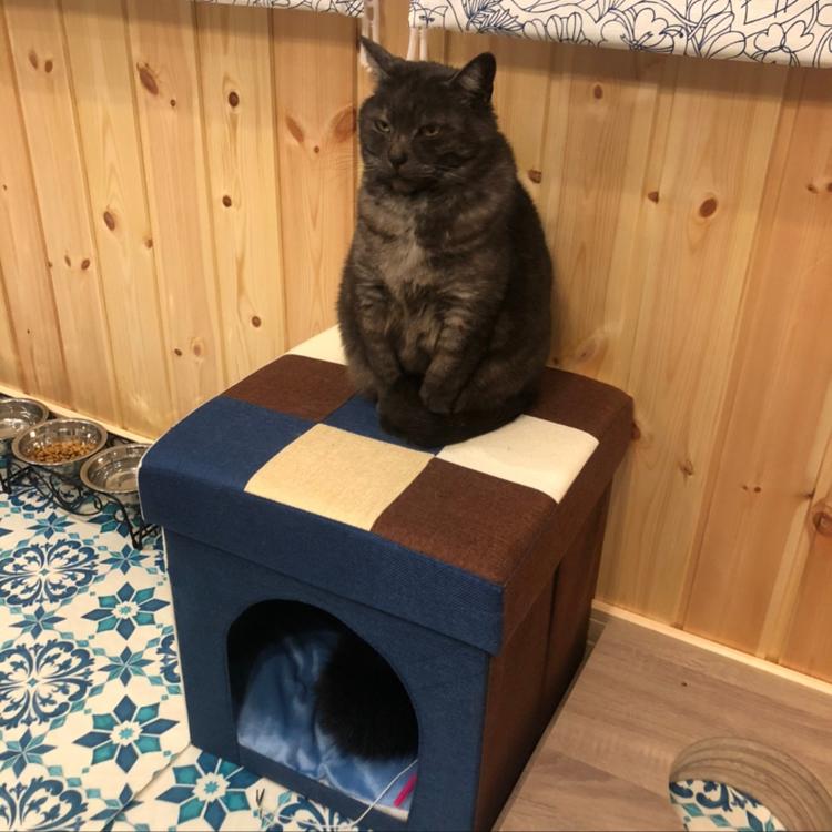 コーナン/猫のための家/スウェーデンハウス /スウェーデンハウス窓/ダイバーの家...などのインテリア実例 - 2021-04-22 09:04:39