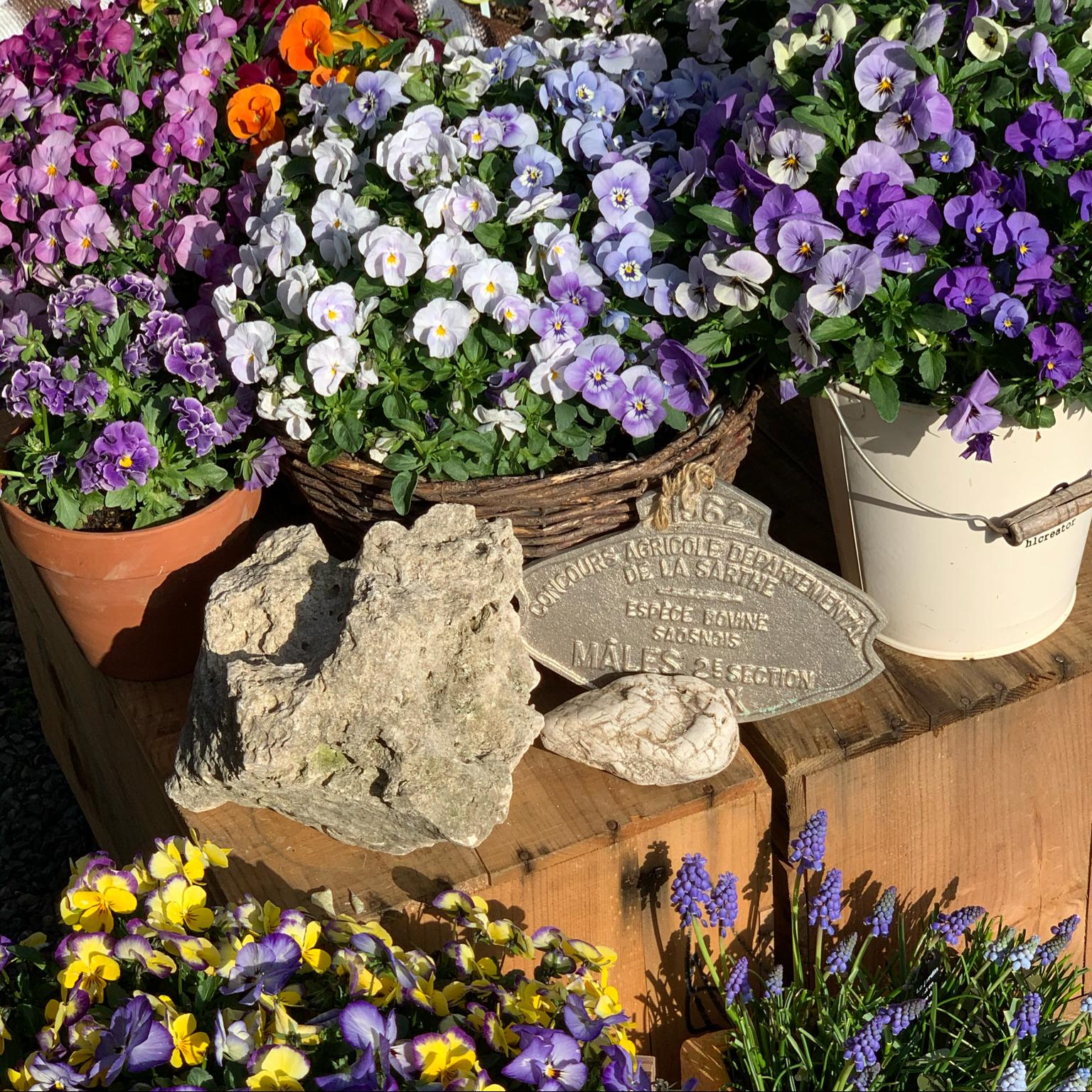 ガーデンルーム/ガーデン/はな/にわのある暮らし/趣味...などのインテリア実例 - 2021-04-22 20:11:06