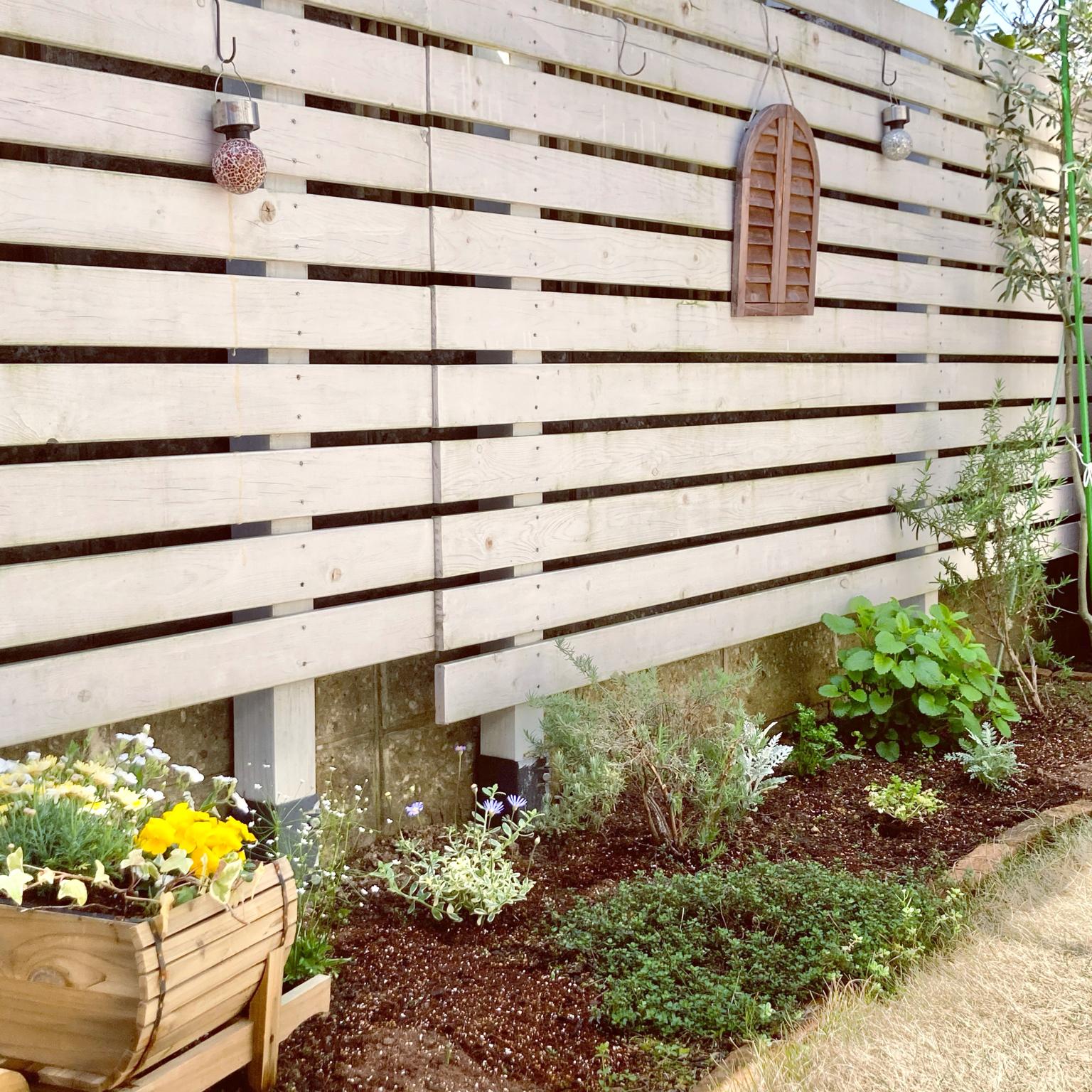 お庭のある暮らし/ナチュラル/木が好き/もみじの木/お庭のある家...などのインテリア実例 - 2021-04-23 10:47:06