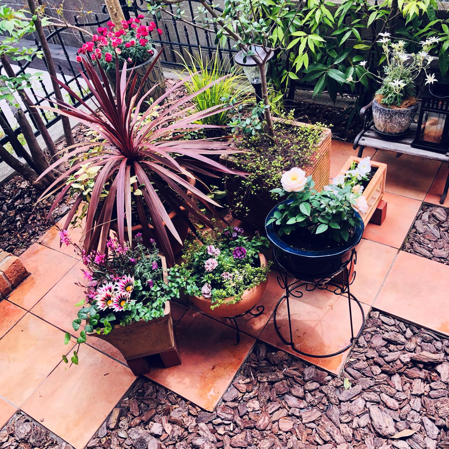 テラコッタ/寄せ植え/ガーデニング/庭/お花のある暮らし...などのインテリア実例 - 2021-04-22 12:36:19