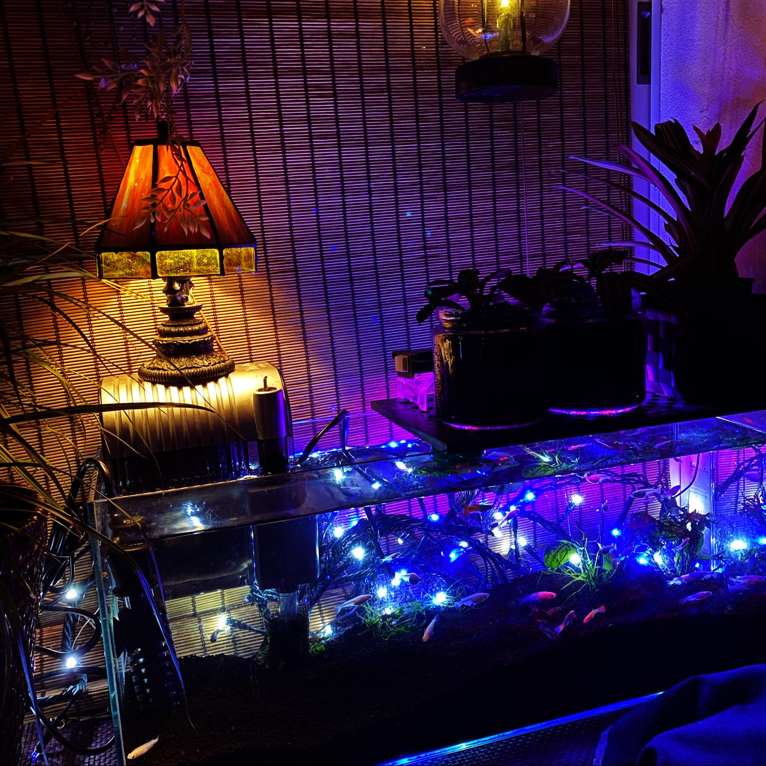 観葉植物/ジャングル化計画/ステンドグラスランプ/ランプの灯り/アクアリウム...などのインテリア実例 - 2021-04-21 21:19:32