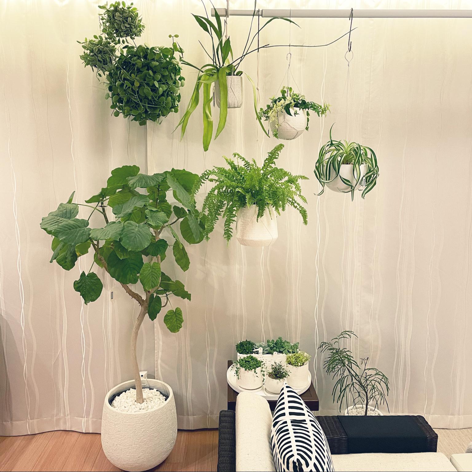 アイビー寄せ植え/ハンギンググリーン/観葉植物/北欧/マンションインテリア...などのインテリア実例 - 2021-04-21 19:54:43