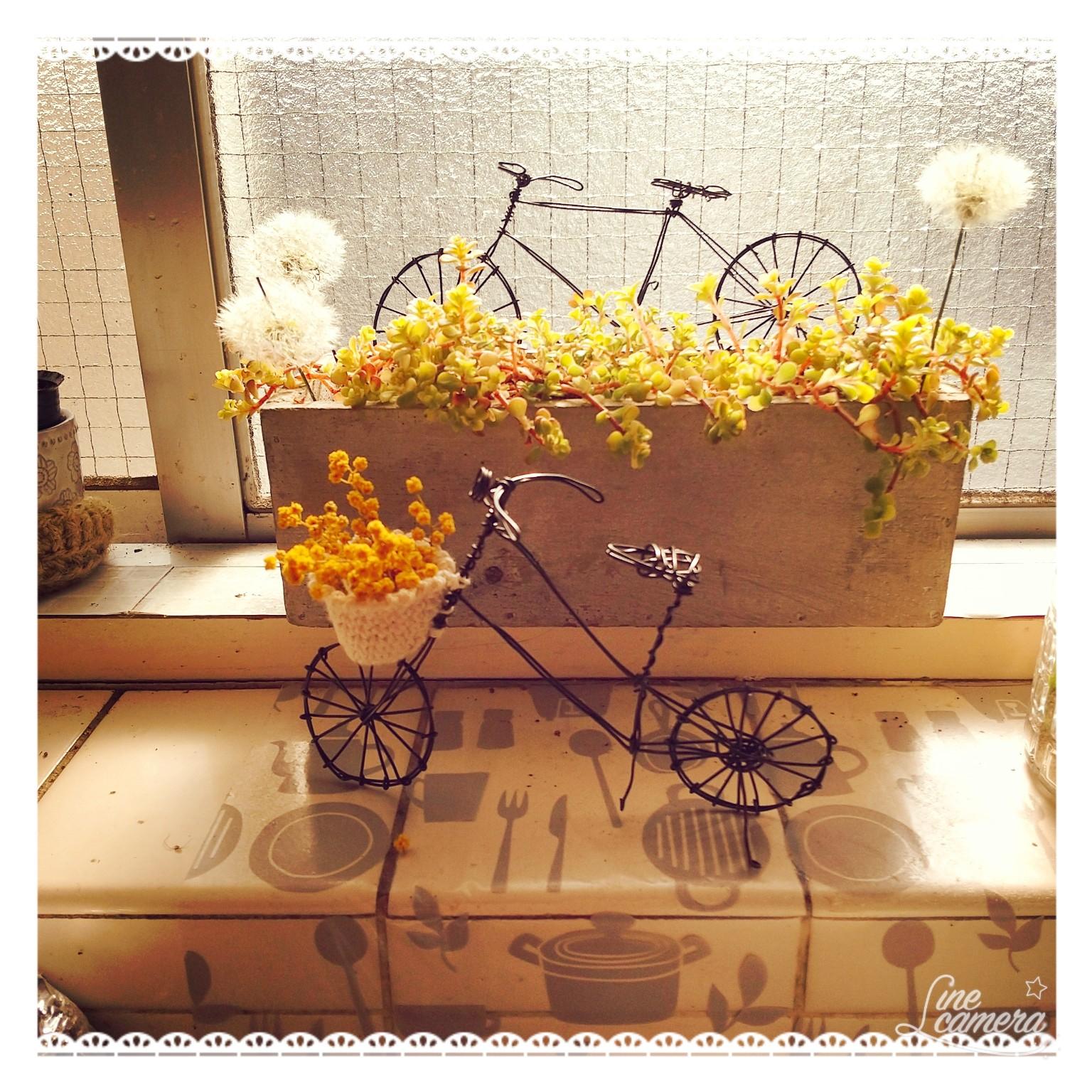 キッチン/記録用/自転車/タンポポの綿毛ドライ/ワイヤー&植物...などのインテリア実例 - 2021-04-20 08:14:45