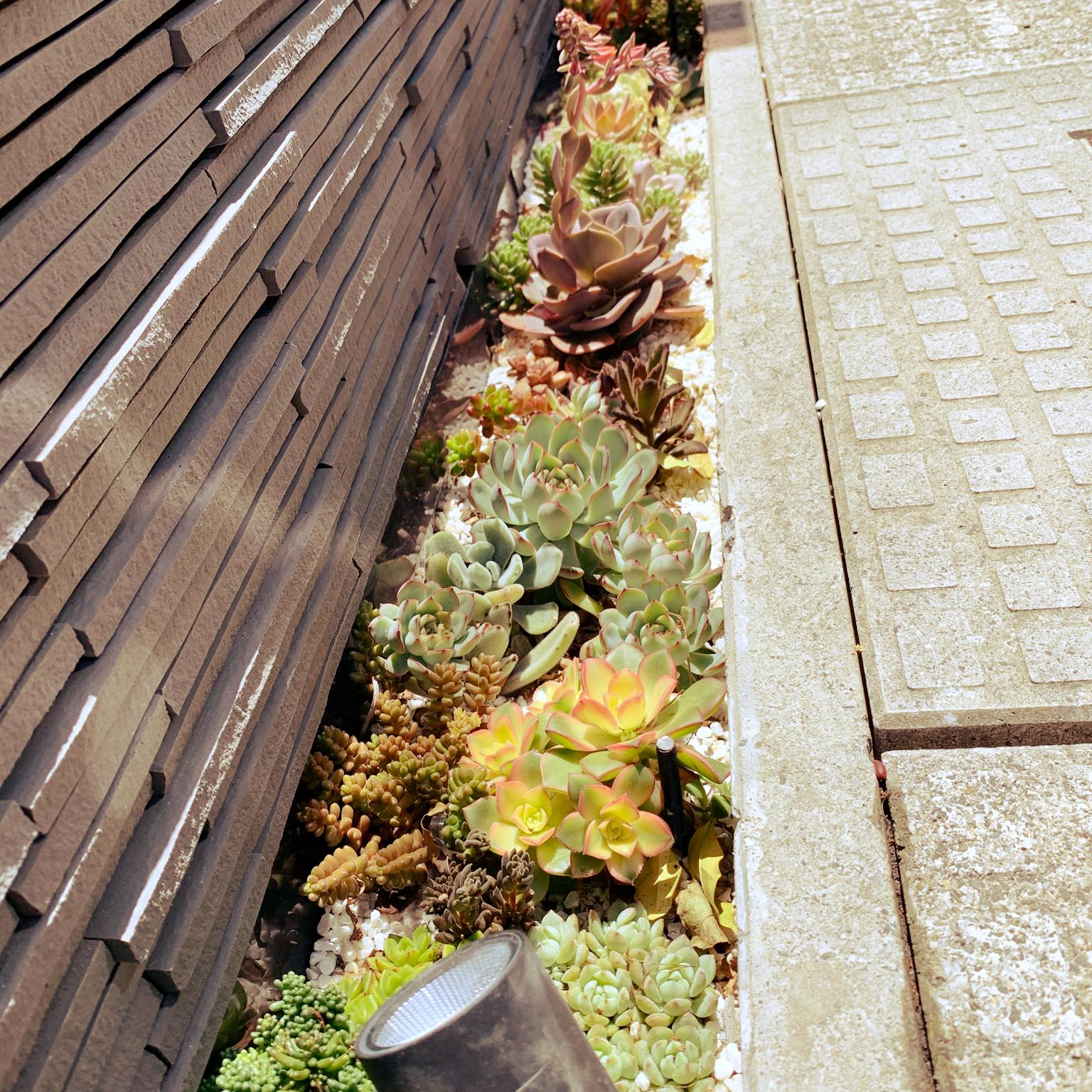 ガーデニング/多肉植物/玄関/入り口のインテリア実例 - 2021-05-10 10:55:24