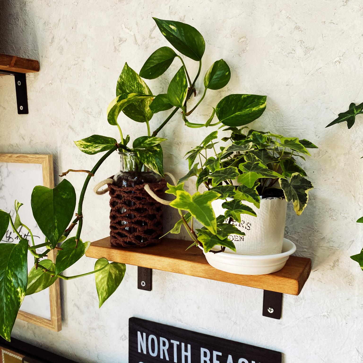 ジャングル/気軽にコメント下さい/観葉植物/植物飾りたい/ブルックリンスタイルに憧れる☆...などのインテリア実例 - 2021-04-22 12:42:08