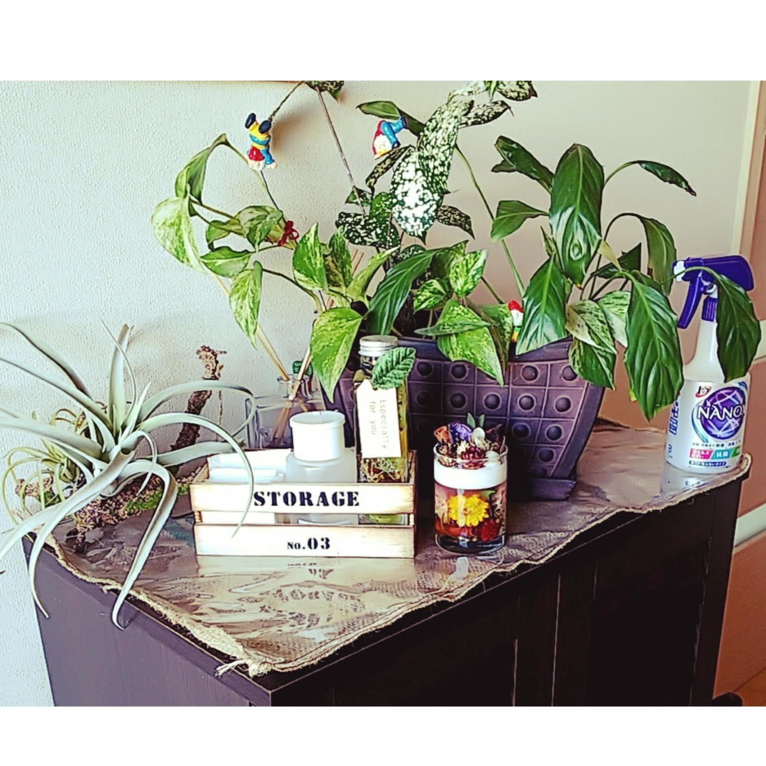 玄関/入り口/除菌/植物のある暮らし/観葉植物のある生活のインテリア実例 - 2020-10-22 12:38:27