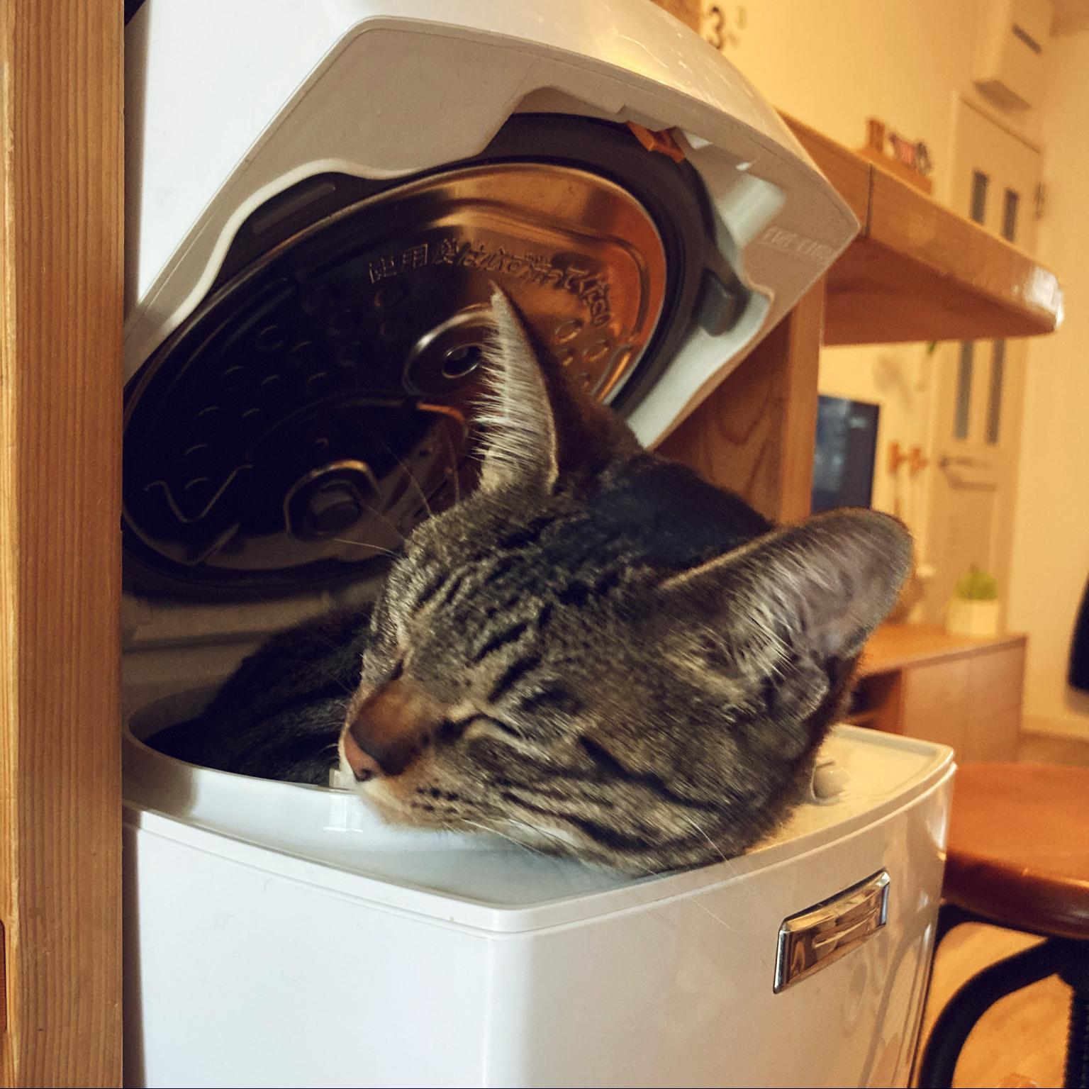 かわいすぎて投稿/猫の写真ですいません(^^;)/狭小住宅/ねこのいる日常/ねこと暮らす。...などのインテリア実例 - 2021-04-22 09:02:48
