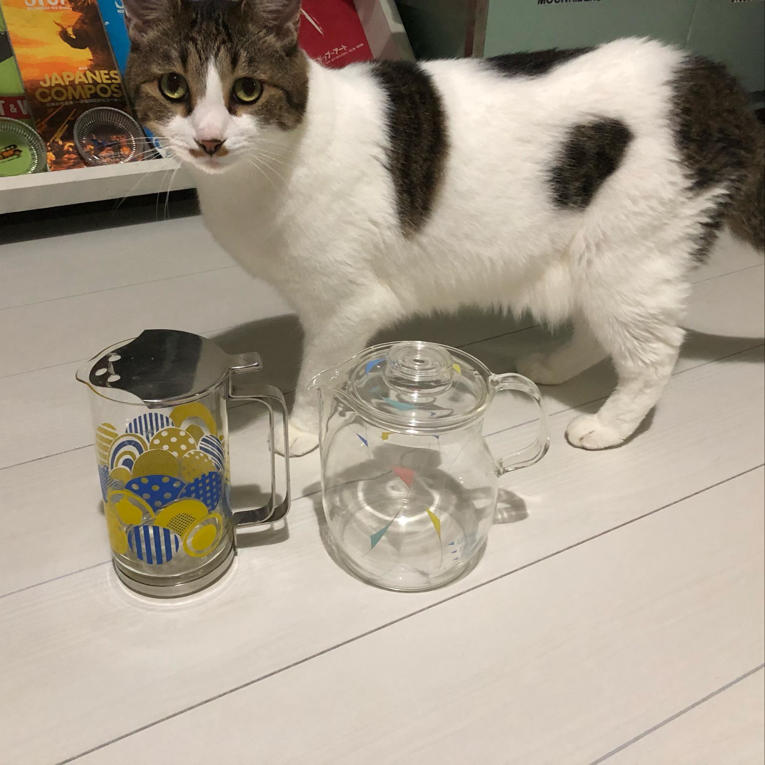 水差し/ガラス雑貨/猫と暮らす/ペットと暮らす/猫と暮らすインテリア...などのインテリア実例 - 2021-09-18 20:40:53