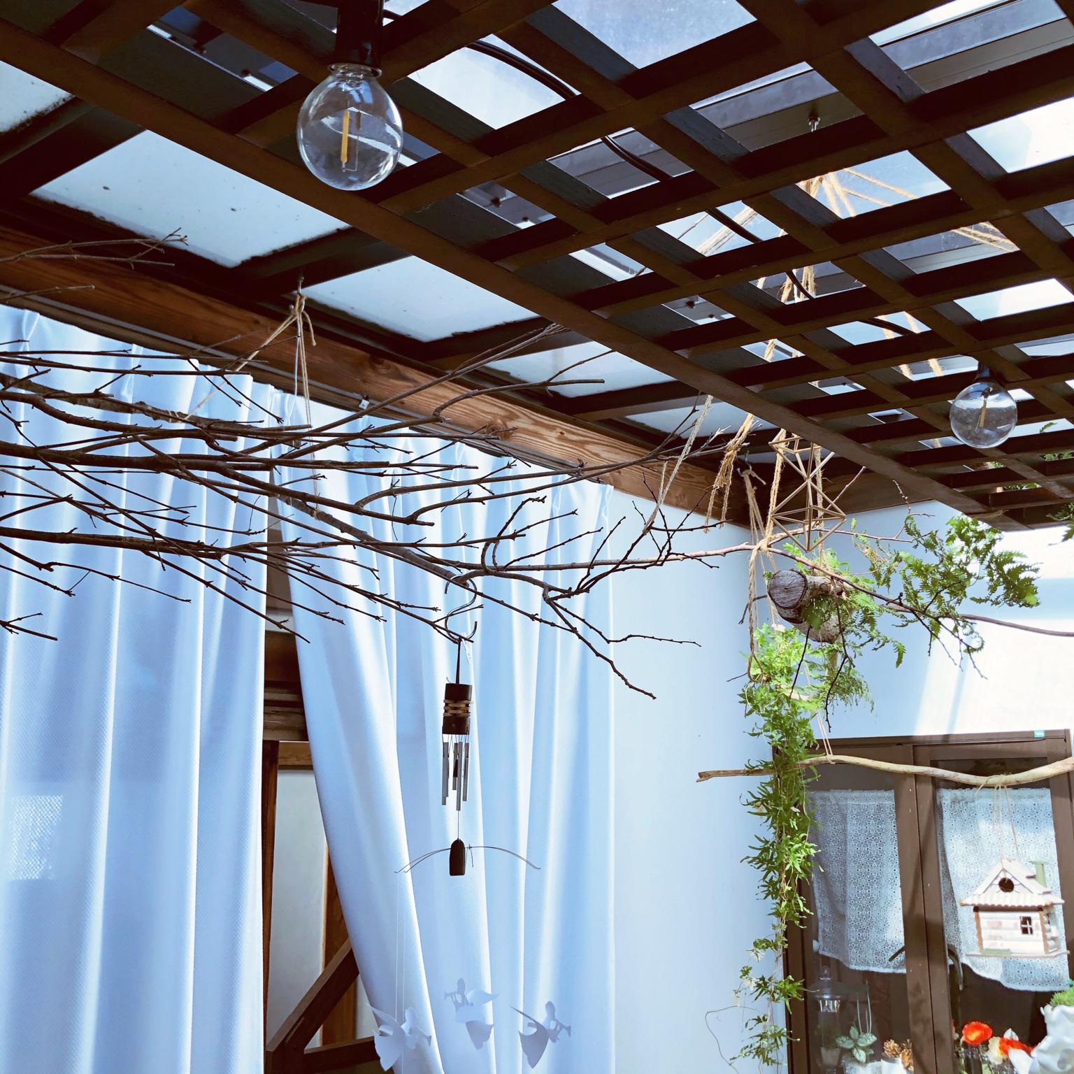 グリーン天井を夢みて/サンルーム/壁/天井のインテリア実例 - 2021-04-23 08:35:59
