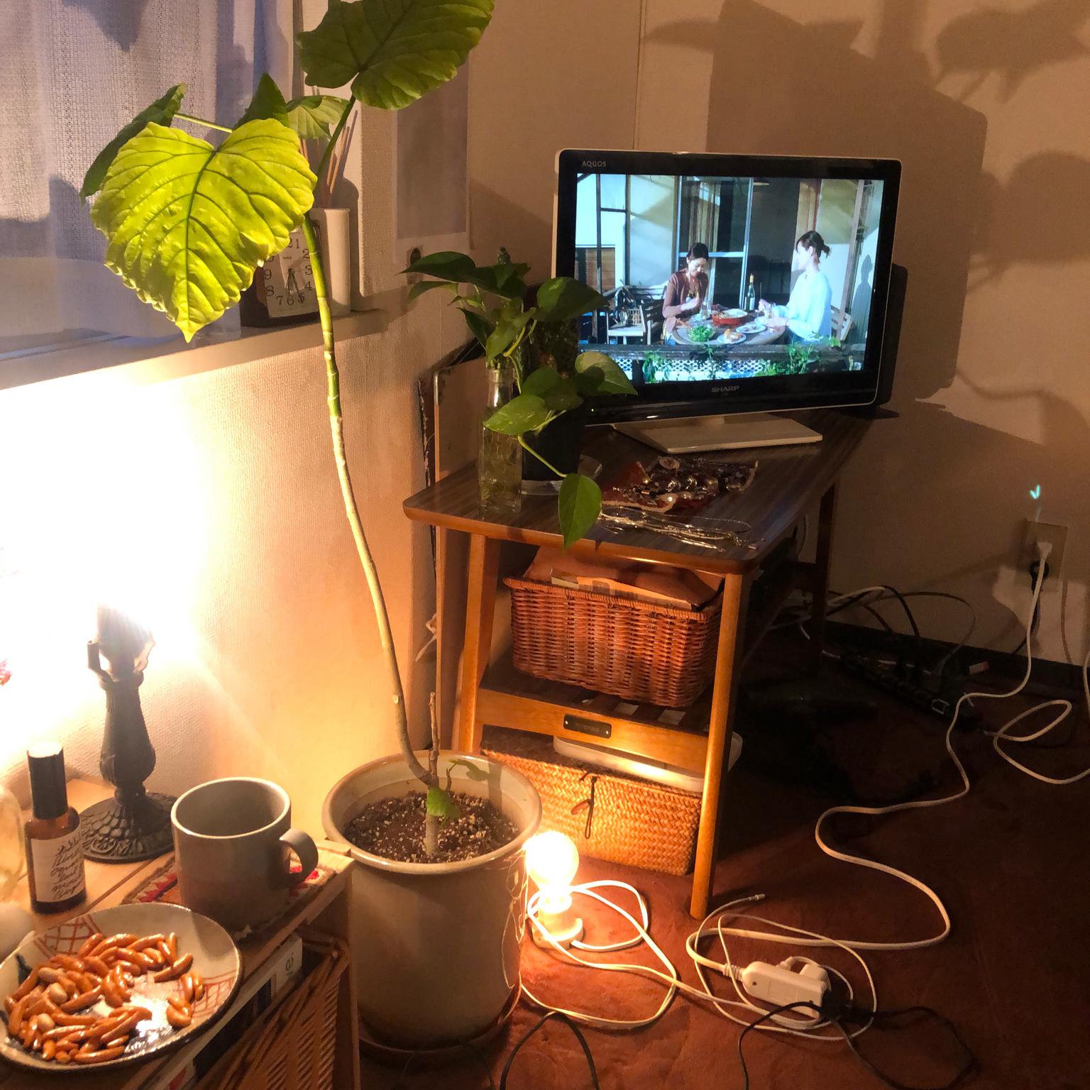 一人暮らし/8畳ワンルーム/観葉植物/照明/アンティーク...などのインテリア実例 - 2021-04-22 22:09:30