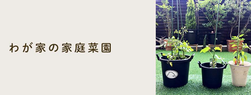 わが家の家庭菜園