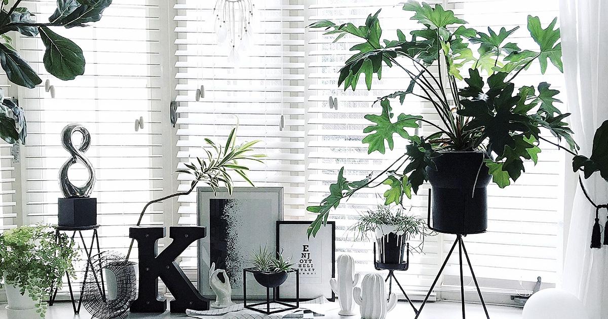 観葉植物の飾り方