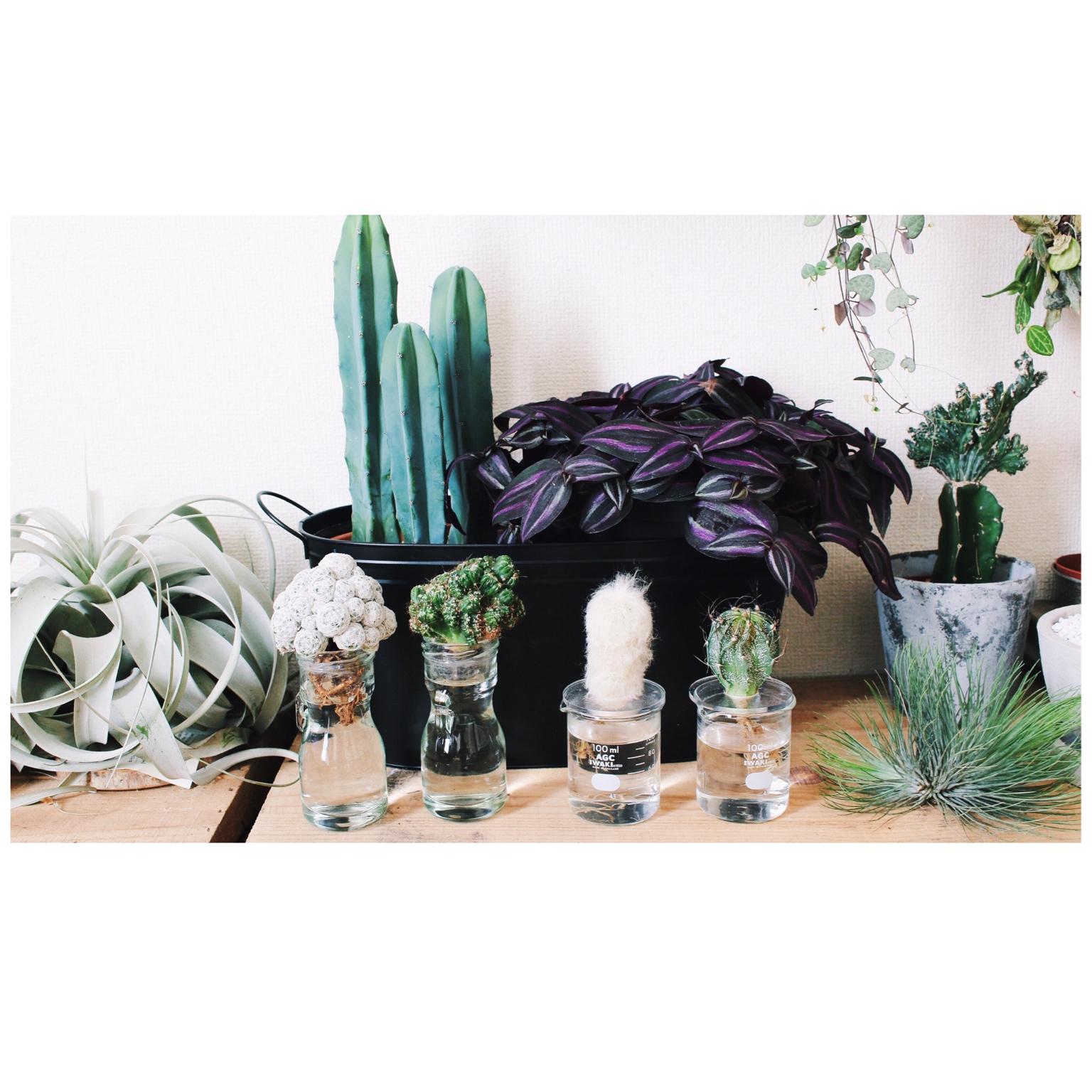 【植物インテリア図鑑】オススメの種類、部屋別コーデを総ざらい