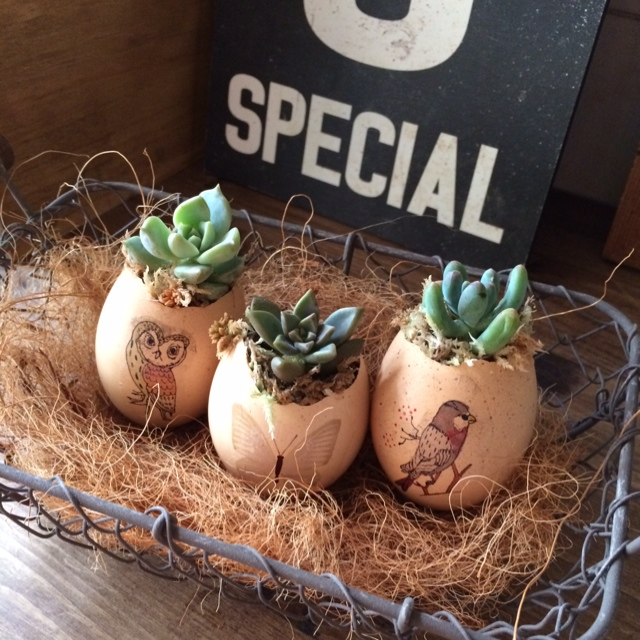 簡単クールなディスプレイ!卵の殻で植物を飾ろう、育てよう♪