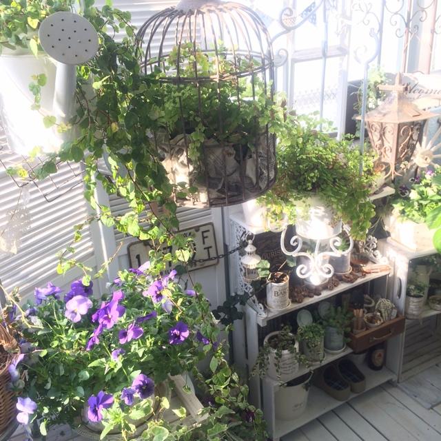 プランター使いでグリーンや花を楽しむ