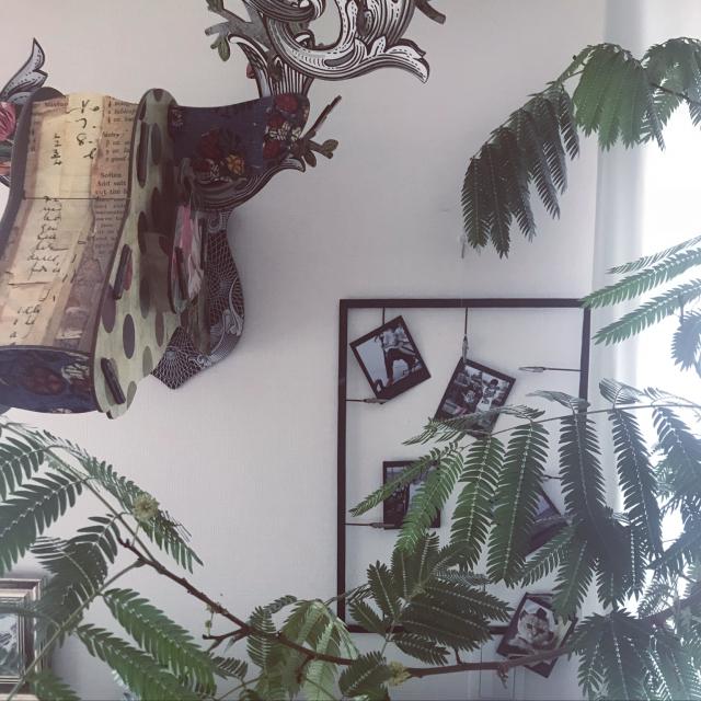 自分で撮った写真だって、立派なインテリアに♡「スマホdeチェキ」で壁デコ術を簡単にワンランクアップ