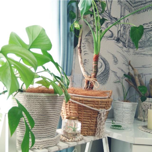 「巻くだけ10分!植木鉢を高見えカバー風にチェンジ◎」 by yoshiさん