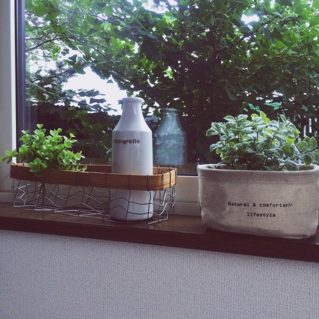 観葉植物入れに活用