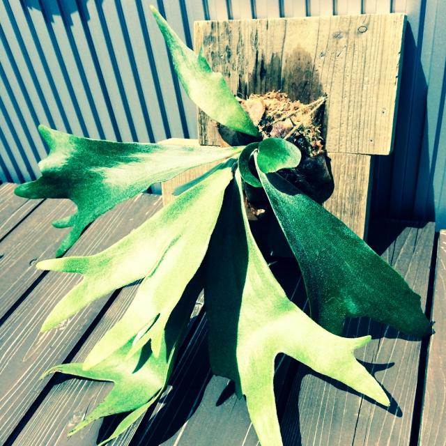 South-Nineさんの鉢植え