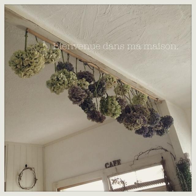 紫陽花を吊るしてドライまでの変化を楽しむ
