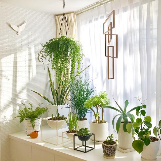 光と空間を上手に使って楽しむ♡私好みの出窓インテリア