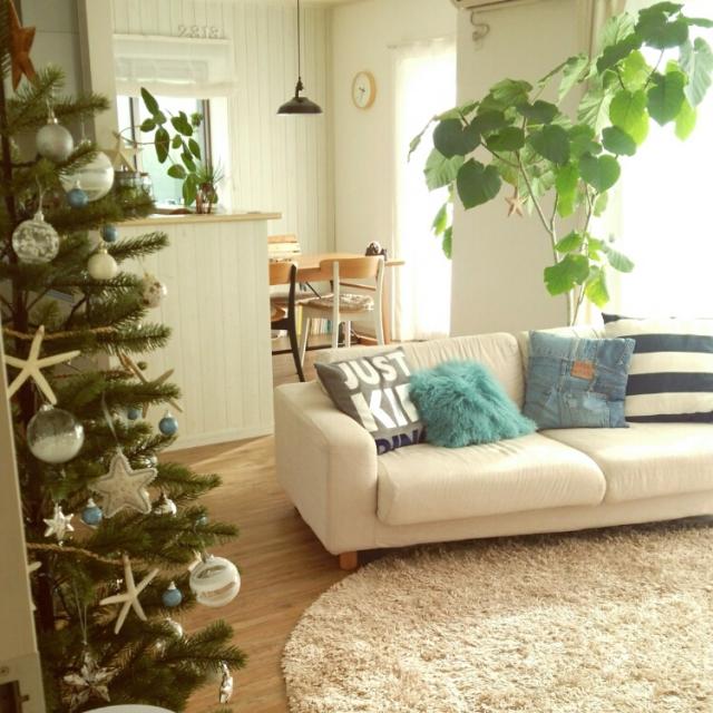 一本の観葉植物が目立つお部屋
