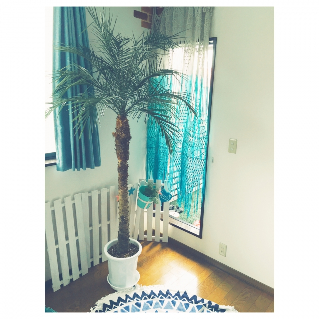 大きなヤシの木、とても素敵です。