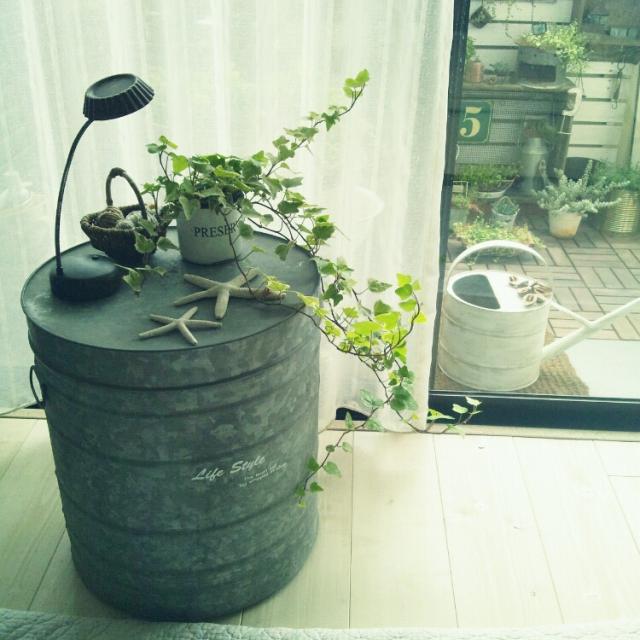 大きな古いブリキ缶の上に植物を飾る