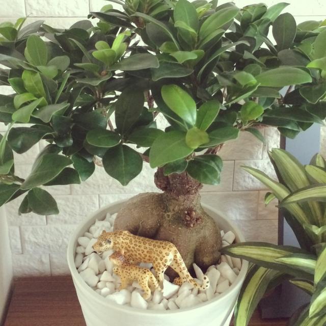 植木鉢の中に動物を飾ってみよう