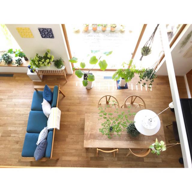 大人が暮らす家へ。グリーンを足して印象的な空間を作ろう