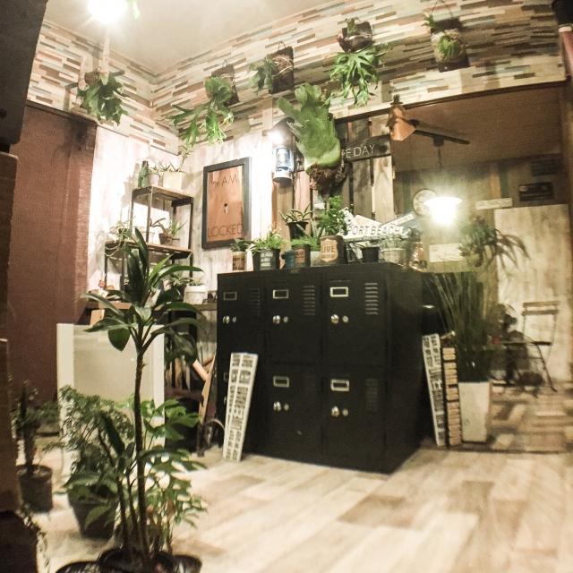 壁に掛けられたコウモリランが印象的な部屋