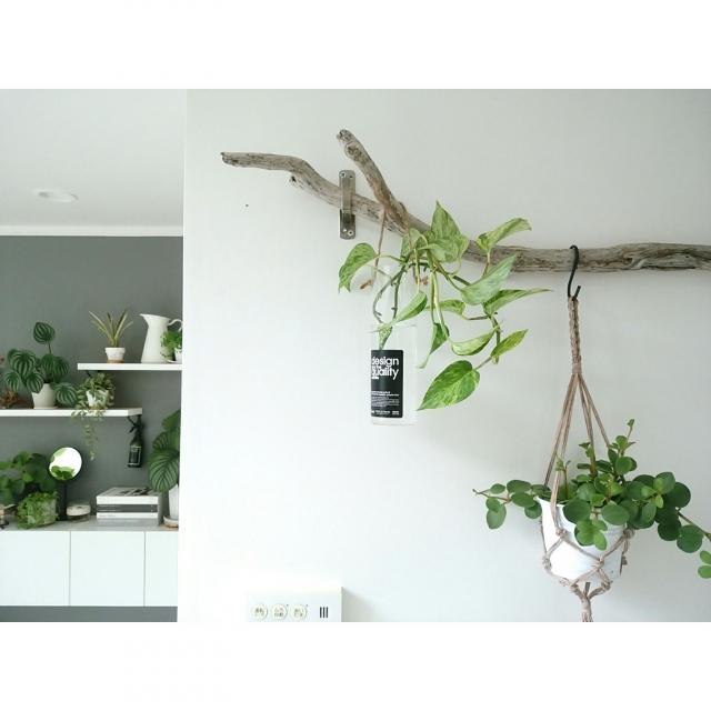 お部屋をアートのように彩る☆自然を感じる流木インテリア