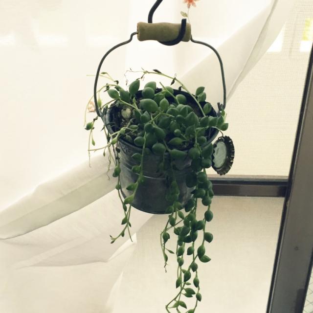 多肉植物でほっこり癒しの空間づくり〜魅せ方いろいろ実例集〜