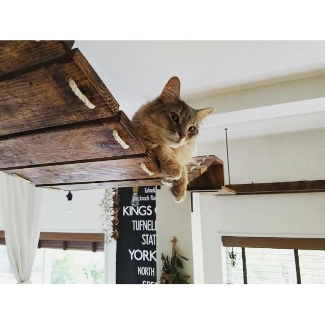 ネコ飼いさんがDIY!ネコちゃんがよろこぶ手作り遊び場